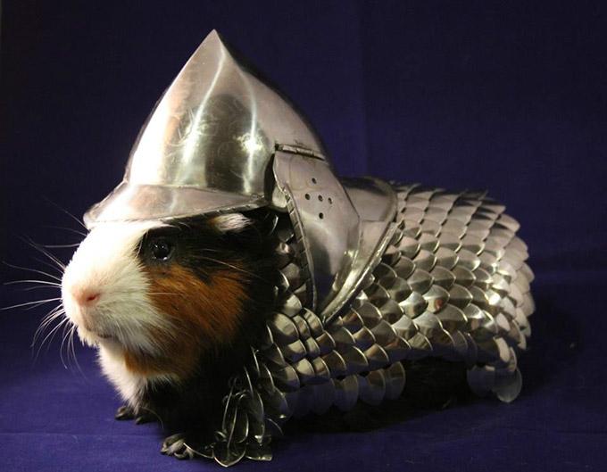 Armura pentru porcul de guineea