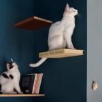 Design de interior: un telefon cu disc și trei pisici!
