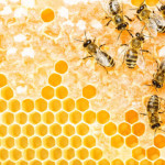 Fermierii au exploatat albinele acum peste 8500 de ani