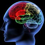 Creierul uman poate detecta boli care încă nu au aparut la alte persoane