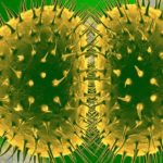 Tulpine ale gonoreei rezistente la antibiotice se extind la nivel global!