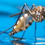 Bolile transmise de țânțari pot fi combatute prin editarea genelor