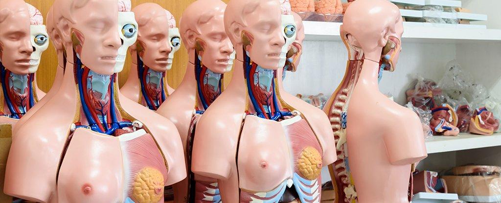 Majoritatea oamenilor au slabe cunoștințe de anatomie, spun cercetătorii englezi