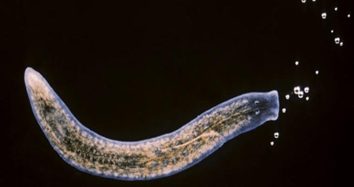 Oamenii de știință au descoperit o celulă care poate regenera orice organ uman!