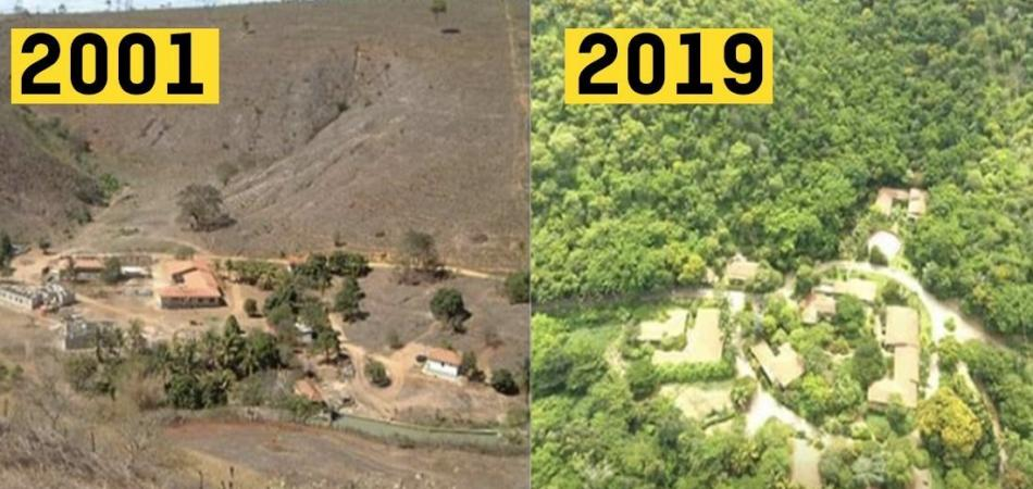Iată rezultatul unui proces de reîmpădurire cu 2,7 milioane de copaci, după 20 ani