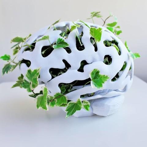 """Ghiveciul cu """"creier"""" – imprimat 3D"""