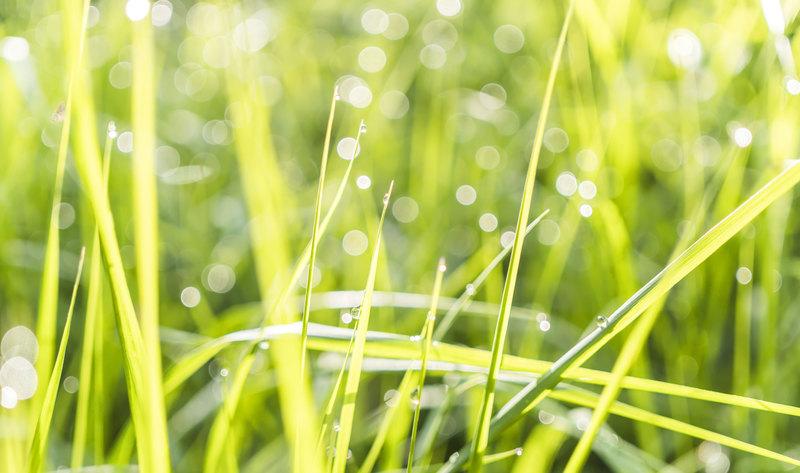 Cercetătorii din Danemarca dezvoltă o metodă prin care, proteină din iarbă să devină digerabilă pentru oameni