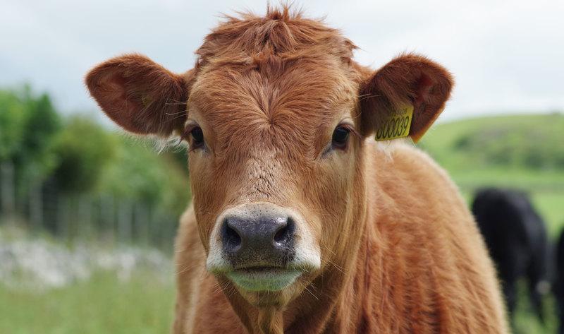 """Studiul prin care se demonstrează că: """"carnea îmbunătățește sănătatea mintală"""" – este fals și finanțat de industria cărnii!"""